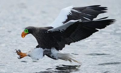 Mise au point Eye AF en temps réel pour les oiseaux