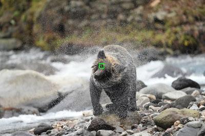 Eye AF temps réel amélioré pour les animaux