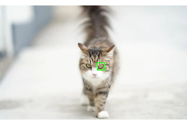 Portraits animaliers avec une mise au point parfaite avec Real-time Eye AF pour animaux qui suit les yeux des animaux