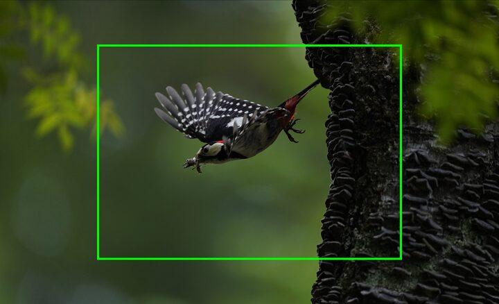 Capteur utile de 26,2 mégapixels avec dimensions APS-C